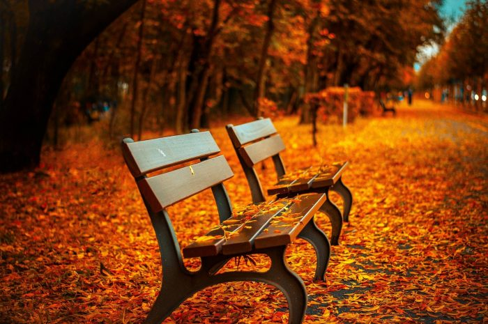Autumn Fall Leaves Outdoors